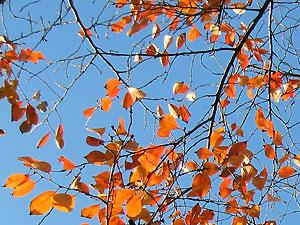 Sakura_2007_11