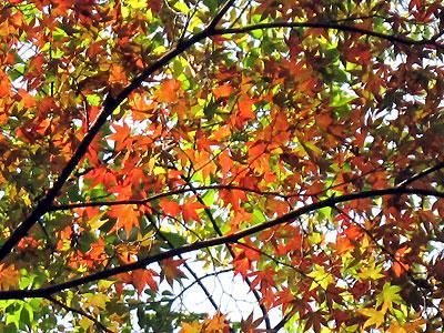 Kyoto09_11_3