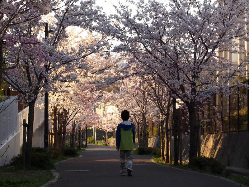 Sakura1404032