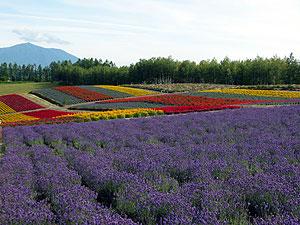 Hokkaido6